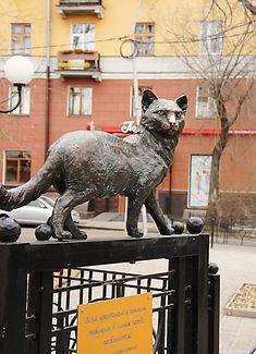 фото иркутских достопримечательностей, Иркутская кошка